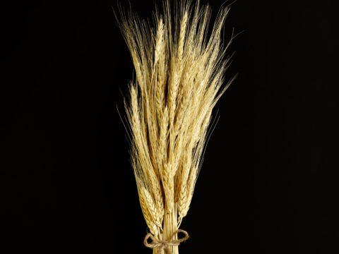Profesjonalna Produkcja Zbóż