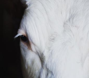 Anti-crises Dairy Farm Management