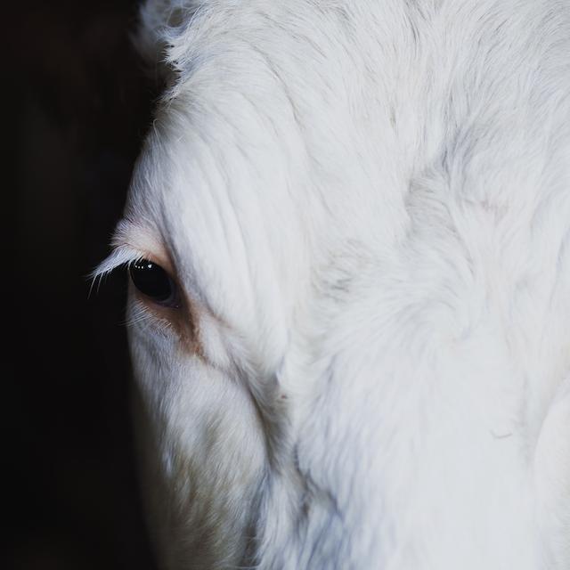 COW Antycrises