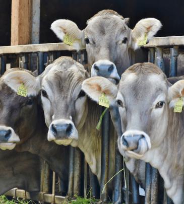 Professional Stressfree Herd Management
